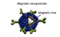magnetic cell