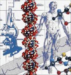 Double Helix DNA